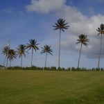 Blue sky with palm trees in Barbados
