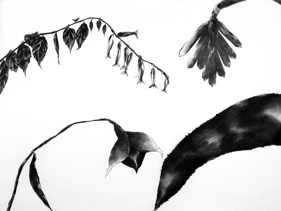 Charcoal image of wilting African flowers